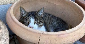 Katze im Blumentopf